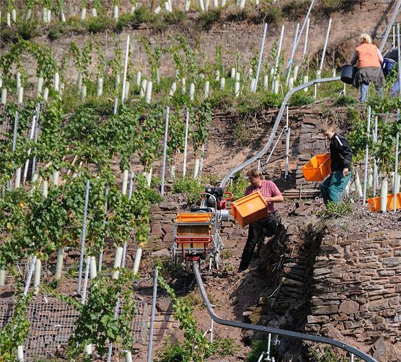 Steilstlagen Weinbau an der Mosel