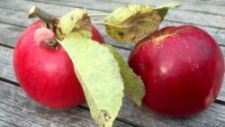 Apfel von der Streuobstwiese